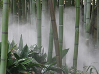 http://www.quirkyquipu.co.uk/holiday2008/images/bamboo.jpg